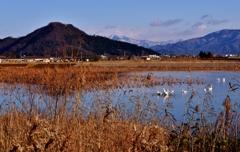 早崎ビオトープ冬景