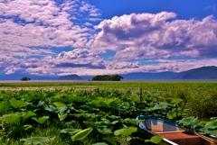 湖北夏風景