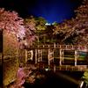 彦根城表門橋夜桜