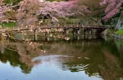 春景の大手門橋