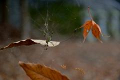 蜘蛛糸に絡む