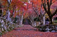 鶏足寺(旧飯福寺)紅葉