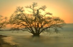 うたたかの水中木