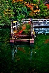 朽ちた桟橋の秋