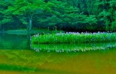 水辺の群生花
