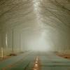 霧の中・樹影トンネル