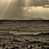 琵琶湖薄明光線・揺らぎのカモ