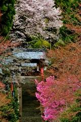 春景の山門石段