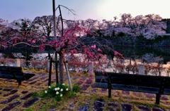 濠端の春の花