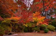 近江商人の紅葉公園 4-4