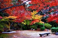 近江商人の紅葉公園 4-3