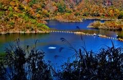 深秋の白龍湖(姉川ダム) 3-2