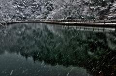 雪のもみじ池