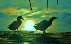 水鳥の朝 4-2