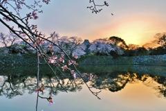 濠端の春朝