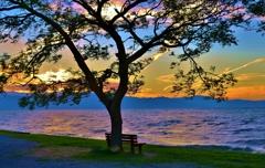 秋夕の「あのベンチ」