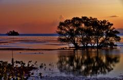 秋夕の水中木