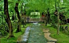 深緑の金剛輪寺赤門