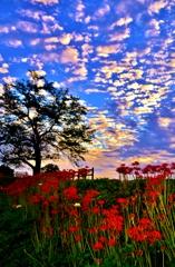 秋空の彼岸花