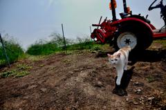 猫とトラクター