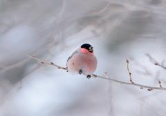 今、咲き誇る鳥たちよ