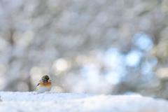ある冬の朝.....
