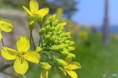 浮島公園の黄色