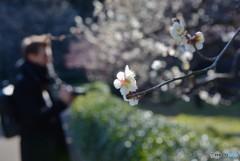 春の兆し・・・皇居編