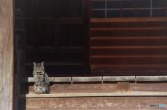 お寺の野良猫(和尚級)
