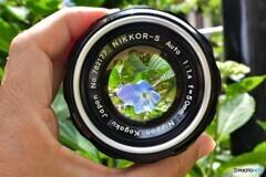 NIKKOR-S Auto 1:1.4 f=50mm