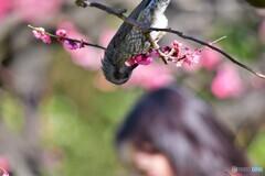 春の夢を・・・食べますよ