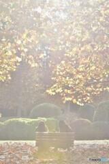 晩秋の陽の下で