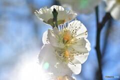 春へのGATE