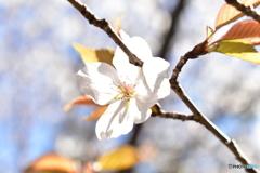 春の・・・露光over!