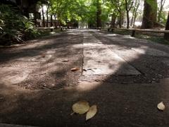 初秋の石道