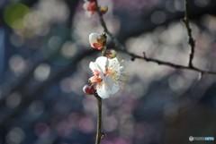 spring・・・と、妖精のつぶやき