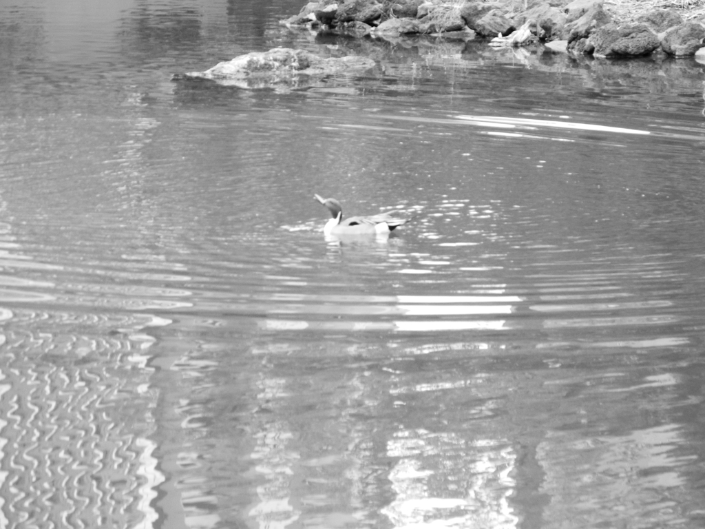 水浴び・・・「陰陽」