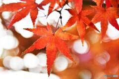 晩秋の東京