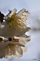咲、其の弐・・・saku ver2