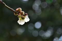 """合唱曲""""春""""・・・のタクト"""