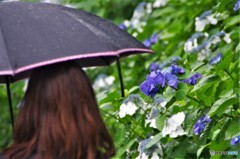 傘と彼女とあじさい・・・と