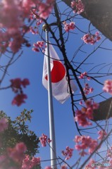 桜と日章旗