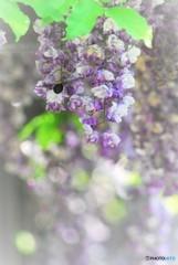 ハチさんとフジさん