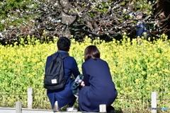菜の花畑の・・・ふたり ver.1