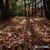 秋と冬の・・・国境線