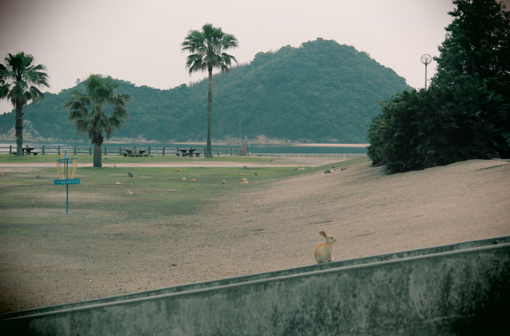 20120611 大久島 523 a