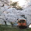 桜をかき分けて
