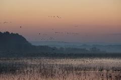 夜明け前の鳥たち