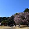 桜を囲む人々