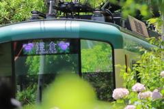 江ノ電と紫陽花 (長谷~極楽寺)